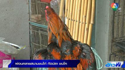 ผ่อนคลายสนามชนไก่ กัดปลา ชนโค แต่ต้องป้องกันโควิด-19 เข้มงวด