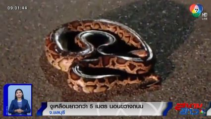 ภาพเป็นข่าว : ผวา! พบงูเหลือมนอนขวางถนน เคราะห์ดีไม่โดนรถทับ จ.ชลบุรี