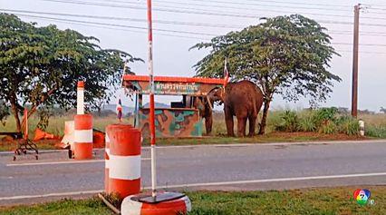 ช้างป่าตกมัน ปะทะเดือด-บุกรื้อด่านทหารพรานพังราบ