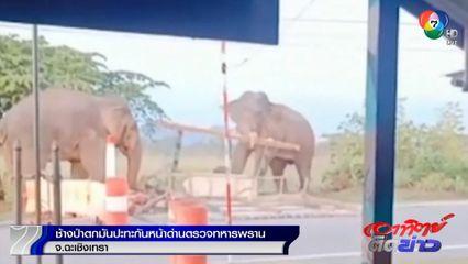 ใหญ่ชนใหญ่! ช้างป่าตกมัน 2 ตัว ปะทะกันหน้าด่านตรวจทหารพราน จ.ฉะเชิงเทรา