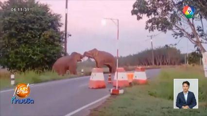 ระทึก ช้างป่า 2 ตัว ต่อสู้ดุเดือดริมถนน รื้อด่านตรวจทหารพังยับ