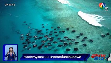 ภาพเป็นข่าว : ตื่นตาตื่นใจ! เผยภาพฝูงกระเบนกว่า 50 ตัว แหวกว่ายในทะเลมัลดีฟส์