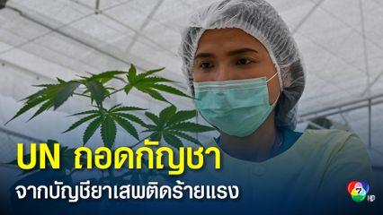 สหประชาชาติถอดกัญชาออกจากบัญชียาเสพติดอันตรายร้ายแรง