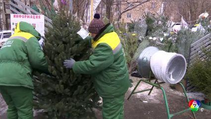 ธุรกิจขายต้นคริสต์มาสยังคงคึกคักในรัสเซีย