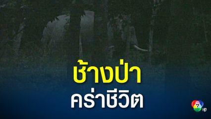 ช้างป่า บุกทำร้ายชายชรา วัย 92 ปี เสียชีวิต
