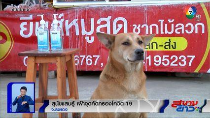 ภาพเป็นข่าว : สุนัขแสนรู้ นั่งเฝ้าจุดเจลแอลกอฮอล์ล้างมือ ป้องกันโควิด-19