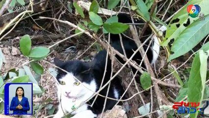 ภาพเป็นข่าว : สุดเวทนา! แมวโดนสุนัขไล่กัด หนีตายโดนลวดหนามเกี่ยวซ้ำ