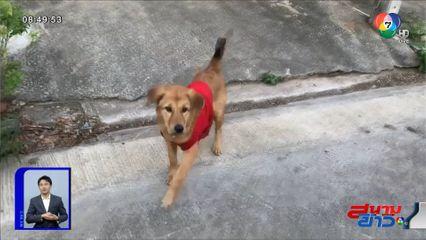 ภาพเป็นข่าว : แสนรู้! สุนัขคาบยาบ้าไว้หน้าบ้าน ตำรวจตามขยายผล