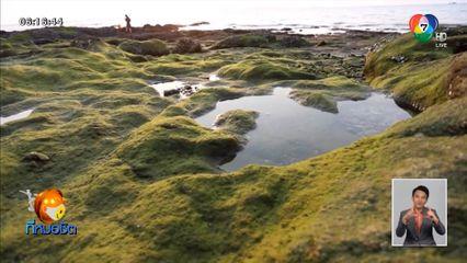 แห่ถ่ายรูปตะไคร่น้ำสีเขียว สะท้อนแสงสวยงาม ที่แหลมบาลีฮาย พัทยา