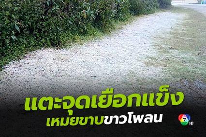หนาวรับเทศกาลตรุษจีน!! ดอยอินทนนท์ 0 องศาฯ แตะจุดเยือกแข็ง เหมยขาบโผล่ขาวโพลน