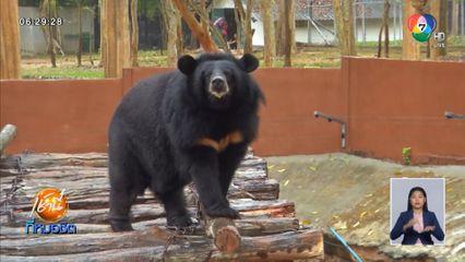 Green Report : ให้อาหารหมีควาย-หมีหมา 100 กว่าตัว