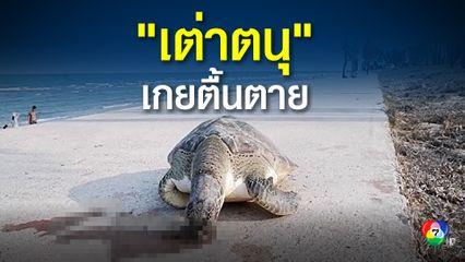 ชาวบ้านพบซากเต่าตนุสภาพสมบูรณ์ลอยมาเกยหาดปราณบุรี