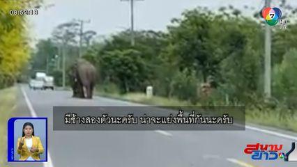 ภาพเป็นข่าว : เจอจังๆ ช้างป่าสู้กันบนถนน ในเขตรักษาพันธุ์สัตว์ป่าเขาอ่างฤาไน จ.ฉะเชิงเทรา