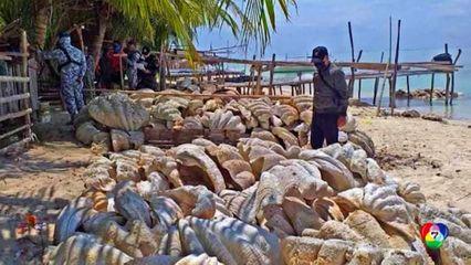 ฟิลิปปินส์ ยึดหอยมือเสือยักษ์ น้ำหนัก 200 ตัน มูลค่าเกือบ 780 ล้านบาท