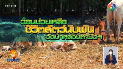 Green Report : วอนช่วยเหลือชีวิตสัตว์นับพันวัดป่าหลวงตาบัวฯ