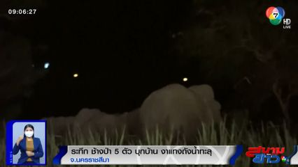 ภาพเป็นข่าว : ระทึก! ช้างป่า 5 ตัว บุกบ้าน งาแทงถังน้ำทะลุ จ.นครราชสีมา