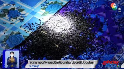 ภาพเป็นข่าว : สุดทน! กองทัพแมลงปีกแข็งบุกบ้าน ต้องหนีไปนอนในรถ