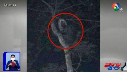 ภาพเป็นข่าว : ขนหัวลุก! หนุ่มไปกางเต็นท์ เจอสายตาปริศนาจ้องมองลงมา