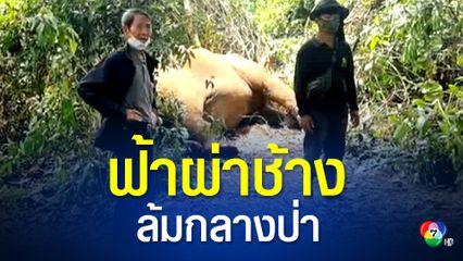 พายุซัดชลบุรี ฟ้าผ่า พังบุญครอง ช้างอายุ 40 ปีล้มกลางป่า