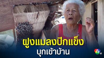 ฝูงแมลงปีกแข็งนับหมื่น บุกเข้าบ้าน ยายวัย 83 ปี ต้องหนีออกไปบ้านนอนบ้านญาติ