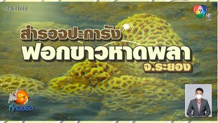 Green Report : สำรวจปะการังฟอกขาวหาดพลา จ.ระยอง