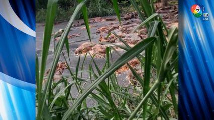 ตั้งรางวัลนำจับ คนทิ้งซากหมูลงแม่น้ำ จ.เพชรบุรี