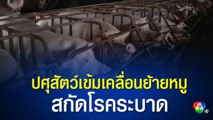 กรมปศุสัตว์ลงดาบฟาร์มทิ้งซากหมูติดโรคลงแม่น้ำ เข้มเคลื่อนย้ายหมูไปโรงฆ่าต้องสุ่มตรวจหาเชื้อก่อน