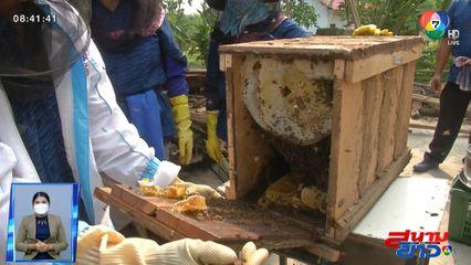 อนุวัตจัดให้ : เคล็ดลับการเลี้ยงผึ้ง