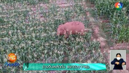 ช้างจีนพลัดถิ่น แยกตัวจากฝูง
