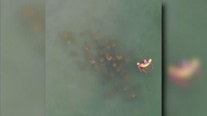 ฝูงปลากระเบน ล้อมนักท่องเที่ยวที่กำลังเล่นน้ำในสหรัฐฯ