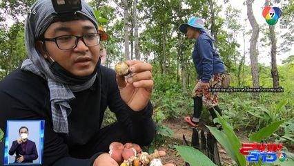 เจษฎาโอ้โฮ Special : วิถีอีสาน คนหาเห็ดป่า