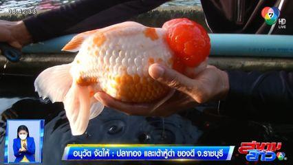 อนุวัตจัดให้ : ปลาทอง และเต้าหู้ดำ ของดี จ.ราชบุรี