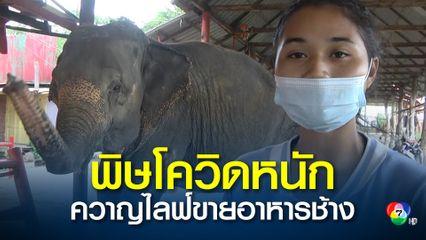 พิษโควิดหนัก ควาญไลฟ์ขายอาหารช้าง