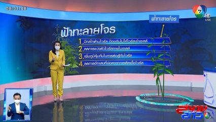 สมุนไพรไทยและยาสามัญ ที่ควรมีติดบ้าน