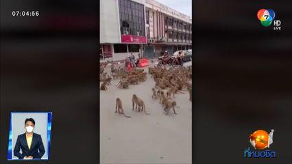 อีกแล้ว! ฝูงลิงลพบุรี ยกพวกตีตะลุมบอนชุลมุนกลางถนน