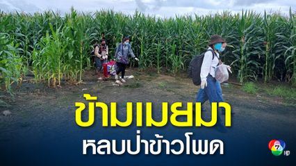 จนท.แม่สอด จับหญิงไทยที่ทำงานบ่อนกาสิโนในเมียนมาลอบเข้าเมืองได้ 10 คนกลางป่าข้าวโพด