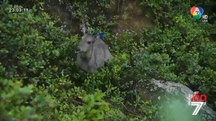 อุทยานแห่งชาติดอยอินทนนท์ ปล่อยสัตว์ป่าคืนสู่ธรรมชาติ