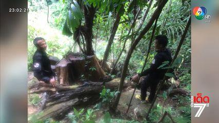 แก๊งมอดไม้รุกป่าลอบตัดไม้ ในเขตอุทยานแห่งชาติบูโด-สุไหงปาดี