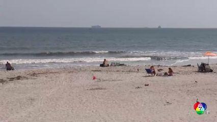 นิวยอร์กปิดชายหาด หลังพบฉลามหลายตัว