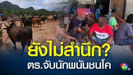 ตำรวจจับนักพนันกว่า 30 คนมั่วสุมเล่นการพนันชนโค