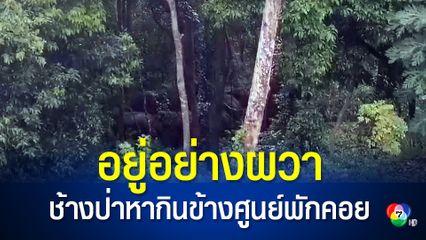 ช้างป่าโป่งน้ำร้อนกว่า 30 ตัว บุกหากินข้างศูนย์พักคอยผู้ติดเชื้อโควิด-19