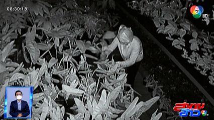 รายงานพิเศษ : ล่าสาวแสบขโมยต้นไม้ด่าง สูญเงิน 2 ล้านบาท จ.นนทบุรี