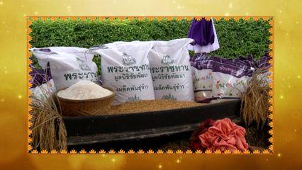 """มูลนิธิชัยพัฒนาดำเนินโครงการผลิตเมล็ดพันธุ์ข้าวหอมมะลิ 105 พระราชทาน """"เพื่อนช่วยเพื่อน"""" เพื่อเป็นคลังสำรองเมล็ดพันธุ์ข้าวฯ สำหรับพระราชทานแก่ราษฎรที่ประสบภัยพิบัติ สนองพระราชดำริสมเด็จพระกนิษฐาธิราชเจ้า กรมสมเด็จพระเทพรัตนราชสุดาฯ สยามบรมราชกุมารี"""