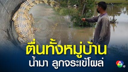 หนุ่มโนนสูงออกหาปลา หลังน้ำลำเชียงไกรเอ่อล้น แต่จับได้ลูกจระเข้