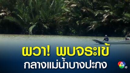 ชาวบ้านผวา! พบจระเข้ขนาดใหญ่ยาวเกือบ 4 เมตร ลอยคออยู่กลางแม่น้ำบางปะกง คาดเป็นจระเข้หลุดจากฟาร์ม
