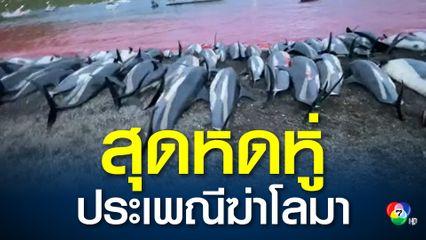 หมู่เกาะแฟโร ฆ่าหมู่โลมาในวันเดียวกว่า 1,400 ตัว