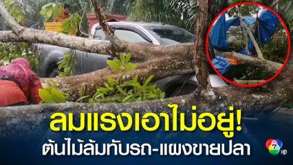 แม่ค้าช็อก! ฝนตกหนักต้นไม้ขนาดใหญ่ล้มทับรถยนต์และแผงขายปลาแม่ค้าในตลาดนัด