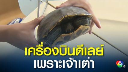 เต่าขวางเครื่องบินบนรันเวย์ในญี่ปุ่น
