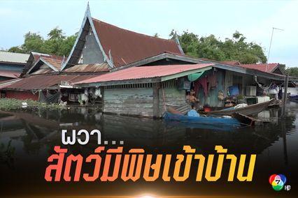 น้ำท่วม ต.กบเจา- ต.สะพานไทย น้ำท่วมสูงเกือบมิดหลังคา