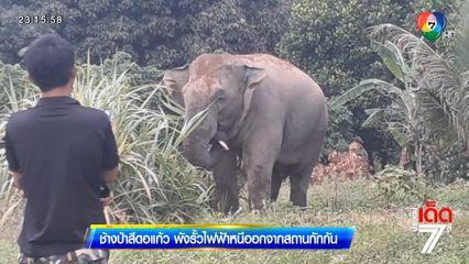 ช้างป่าสีดอแก้ว พังรั้วไฟฟ้าหนีออกจากสถานกักกัน